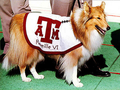 Texas A&M honors mascot with scoreboard